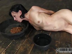 That honey has a bowl with water and one with food. Elise was a total doxy and now she's treated like one. Look at her how this honey struggles to eat and mostly of that food is on her face. What a obscene whore, this honey merits greater quantity punishment for her manners. But 1st this honey needs some greater quantity humiliation, let's see her play.